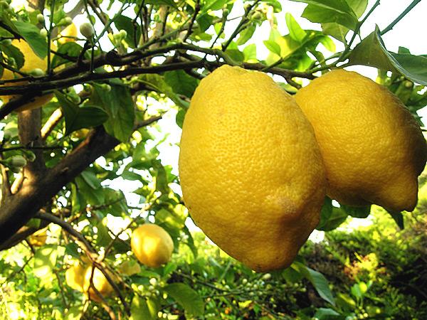 Olio-Extravergine-al-limone
